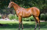 Ripper Rita wins the VOBIS Sires Guineas
